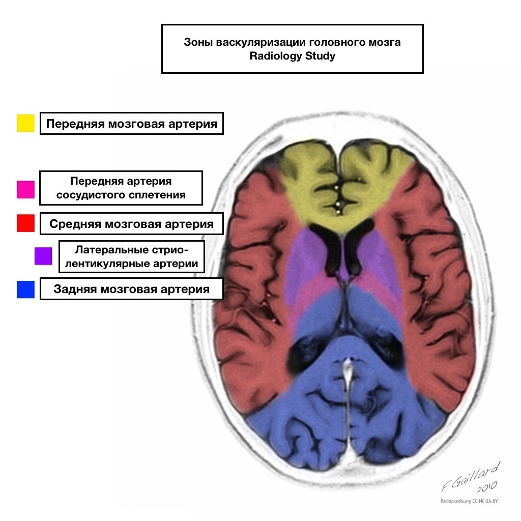 Кровоснабжение головного мозга схема фото 966